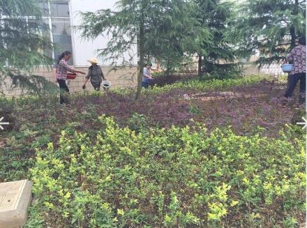 施用花卉专用有机肥后