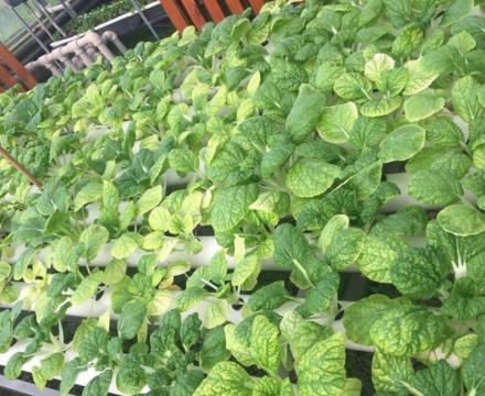 有机肥播种施肥