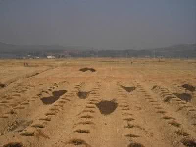 贵州油枯有机肥公司哪家好