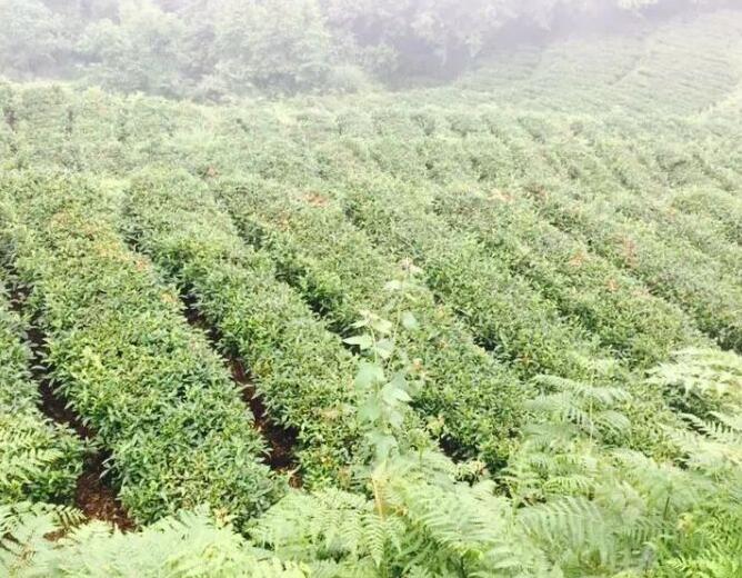 贵州化肥公司哪家好