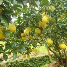 贵州有机肥生产