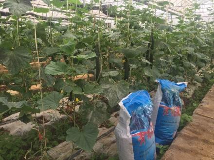 贵州有机肥料公司