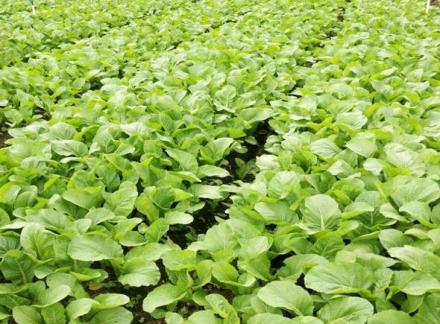 贵州有机肥料哪家好