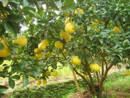贵州有机肥制作技术