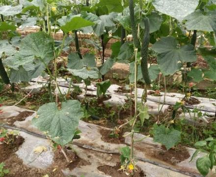 贵州有机化肥