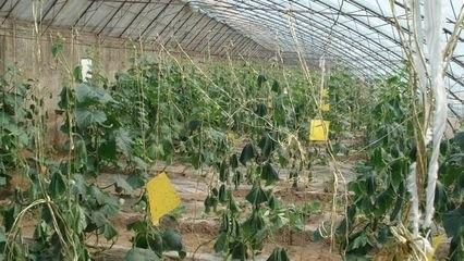 贵州有机化肥生产厂家